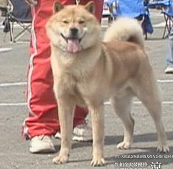 本部参考犬 涼太・英明荘