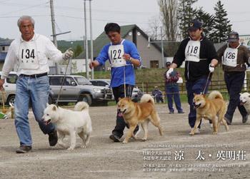 平成21年春季本部展成犬牡組比較審査時の涼太・英明荘(ゼッケン122)