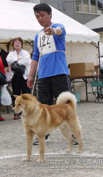 平成21年本部展成犬牡組を獲得しウィニングサークルに立つ涼太・英明荘。 ハンドリングは木戸博勝氏の兄の木戸和也氏がつとめた。
