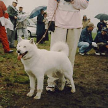白優・千歳金森が平成16年の秋季本部展で 牡犬日本一獲得時の画像