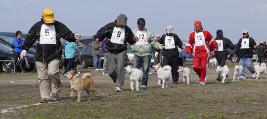 北海道犬保存会主催の大会